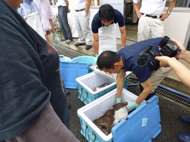 Sorting the catch from the trial fisheries